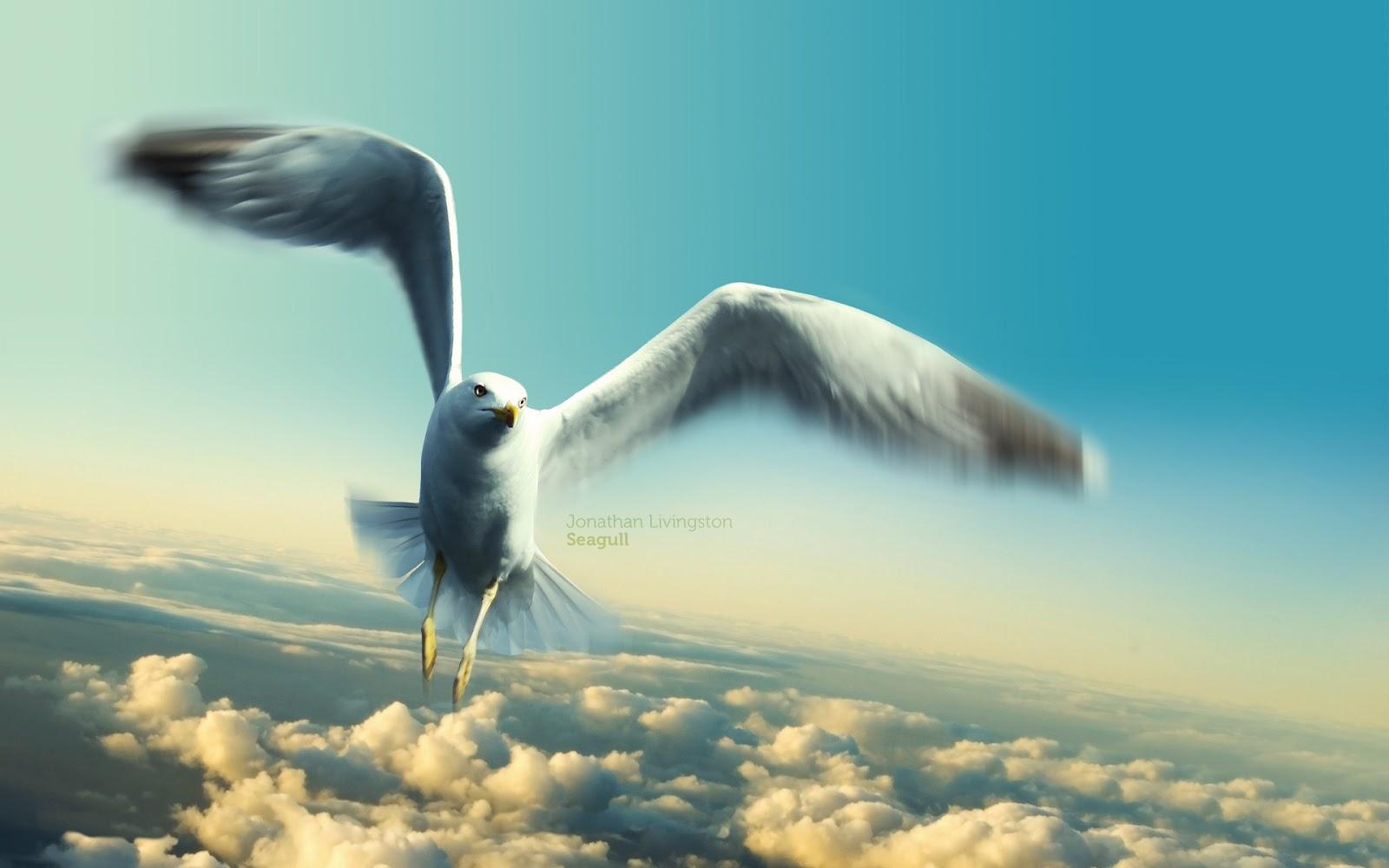 http://4.bp.blogspot.com/--7nlMiQRPTw/UI0e-nyuSPI/AAAAAAAAAEY/WnlP3T8uSbs/s1600/jonathan_livingston_seagull-wallpaper.jpg