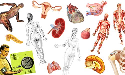 O que estuda fisiologia humana