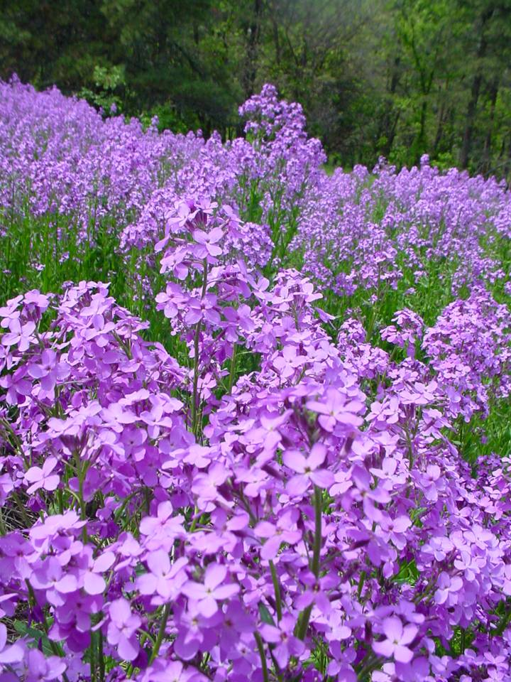 Custer Park flowers photo by Lee Alley