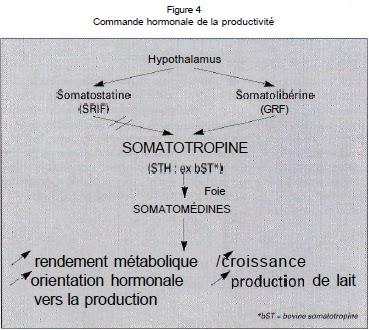 medecine veterinaire: LA SOMATOTROPINE