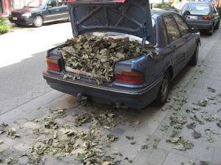 Carro com folhas