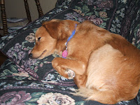 Photo of Kalisha's Dog...Tired Out and Sleeping