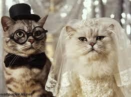 foto gokil pernikahan