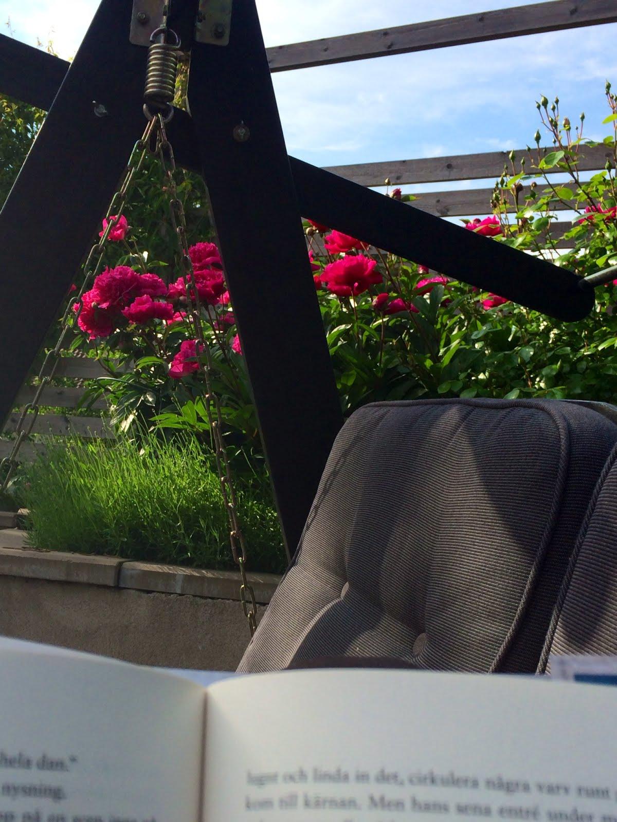 Utsikt från en hammock