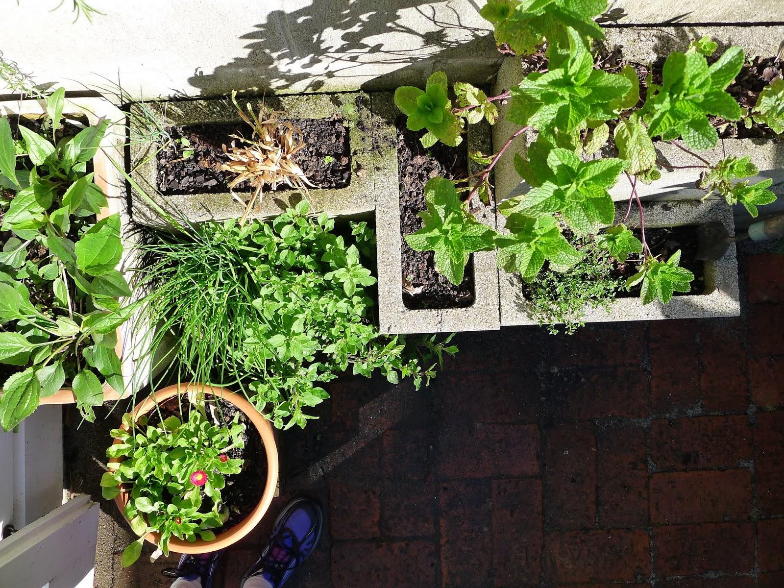 herb garden happiness five course garden