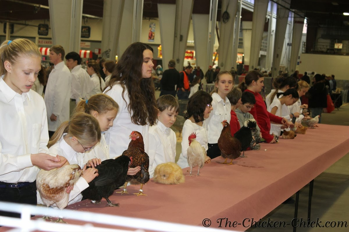 4-H students showing their birds