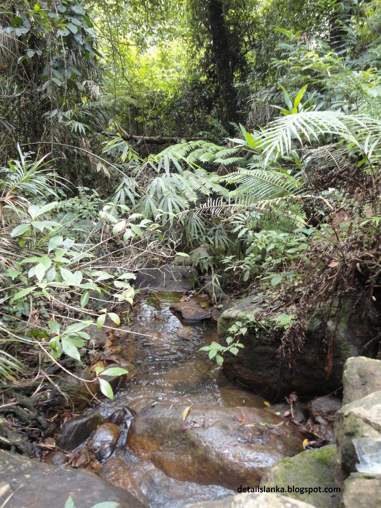 sinharaja forest Book sinharaja rain forest view villas, deniyaya on tripadvisor: see 38 traveler reviews, 50 candid photos, and great deals for sinharaja rain forest view villas, ranked #2 of 16 specialty lodging in deniyaya and rated 4 of 5 at tripadvisor.