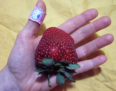 Gigantic Strawberry Covers Palm of Hand