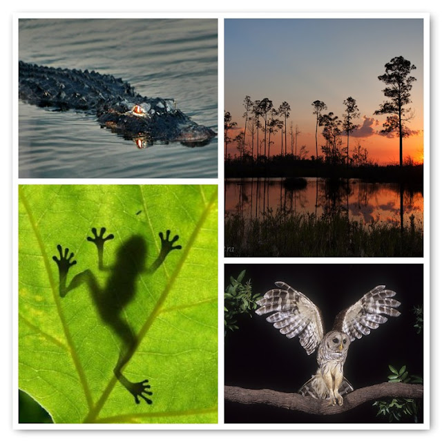 Night in the Okefenokee Swamp
