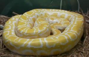 Python Calusa Nature Center & Planetarium, Fl