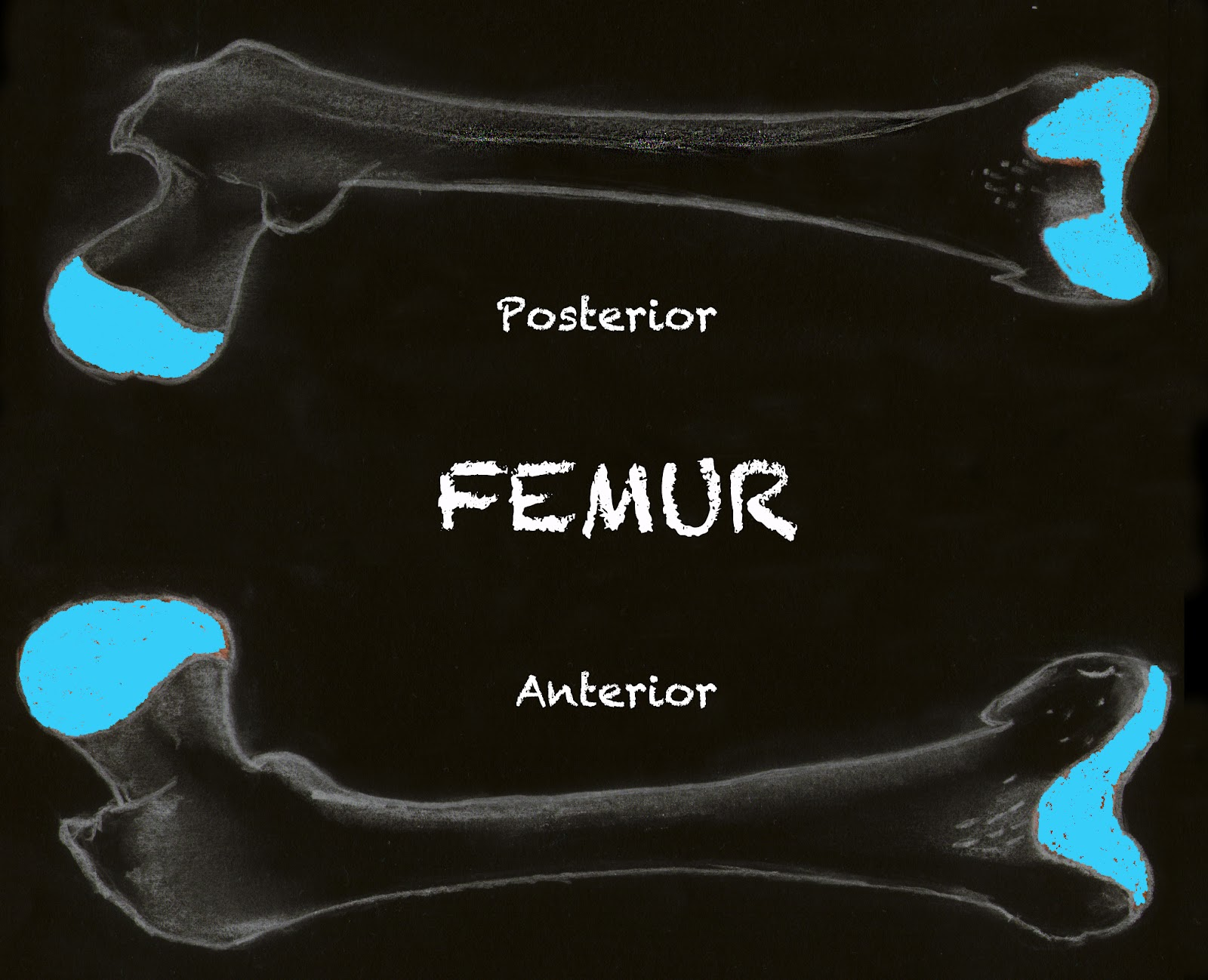 Femur Length-4.bp.blogspot.com