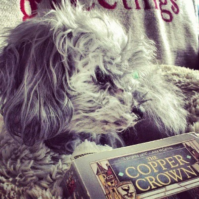 A fuzzy grey poodle, Murchie, lays on a fuzzy greyish pillow with a grey book beside him. Only its title, The Copper Crown, is visible in the picture.