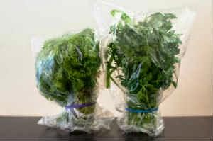 conservar-ervas-aromaticas