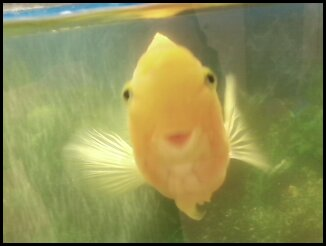 Passed on to Fish Heaven on April 16. 2012