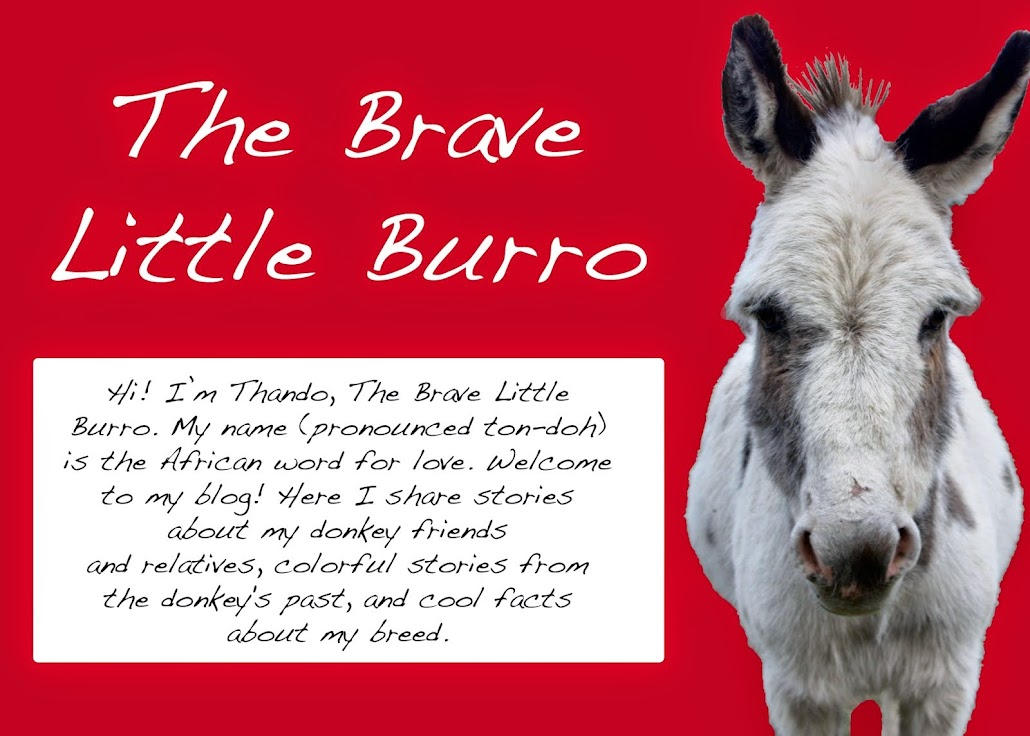 The Brave Little Burro