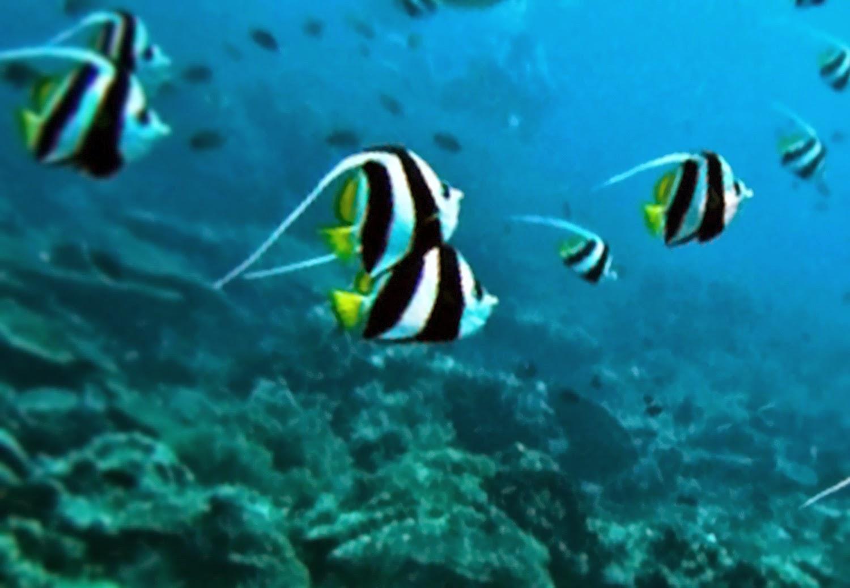 10 Lokasi Terindah dan Menakjubkan untuk Menyelam di Indonesia