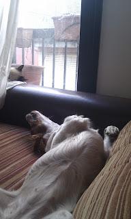 Vaya siestacas nos pegábamos todos