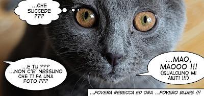 Blues gatto Certosino fumetto rebeccatrex