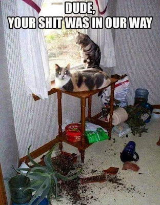 Funny cat photo