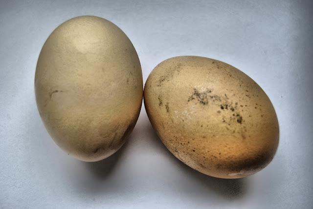 Jajka wysoka jakosć, wysoka jakość jajek