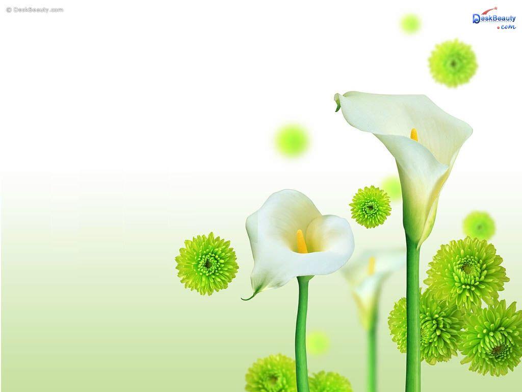 http://4.bp.blogspot.com/--C7iNggVvTk/UESQfnUD47I/AAAAAAAAA8U/Ff9KF4VRQNM/s1600/flower%2Bwallpaper%2Bhd%2B2.jpg