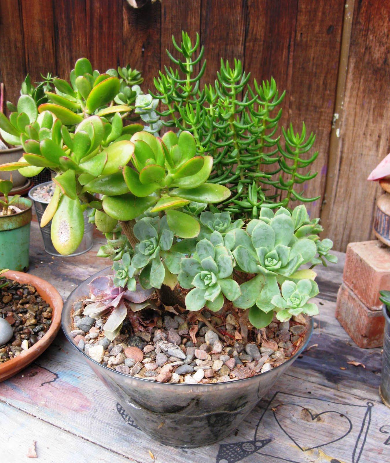 Fringe Art Unique Pots And Plants