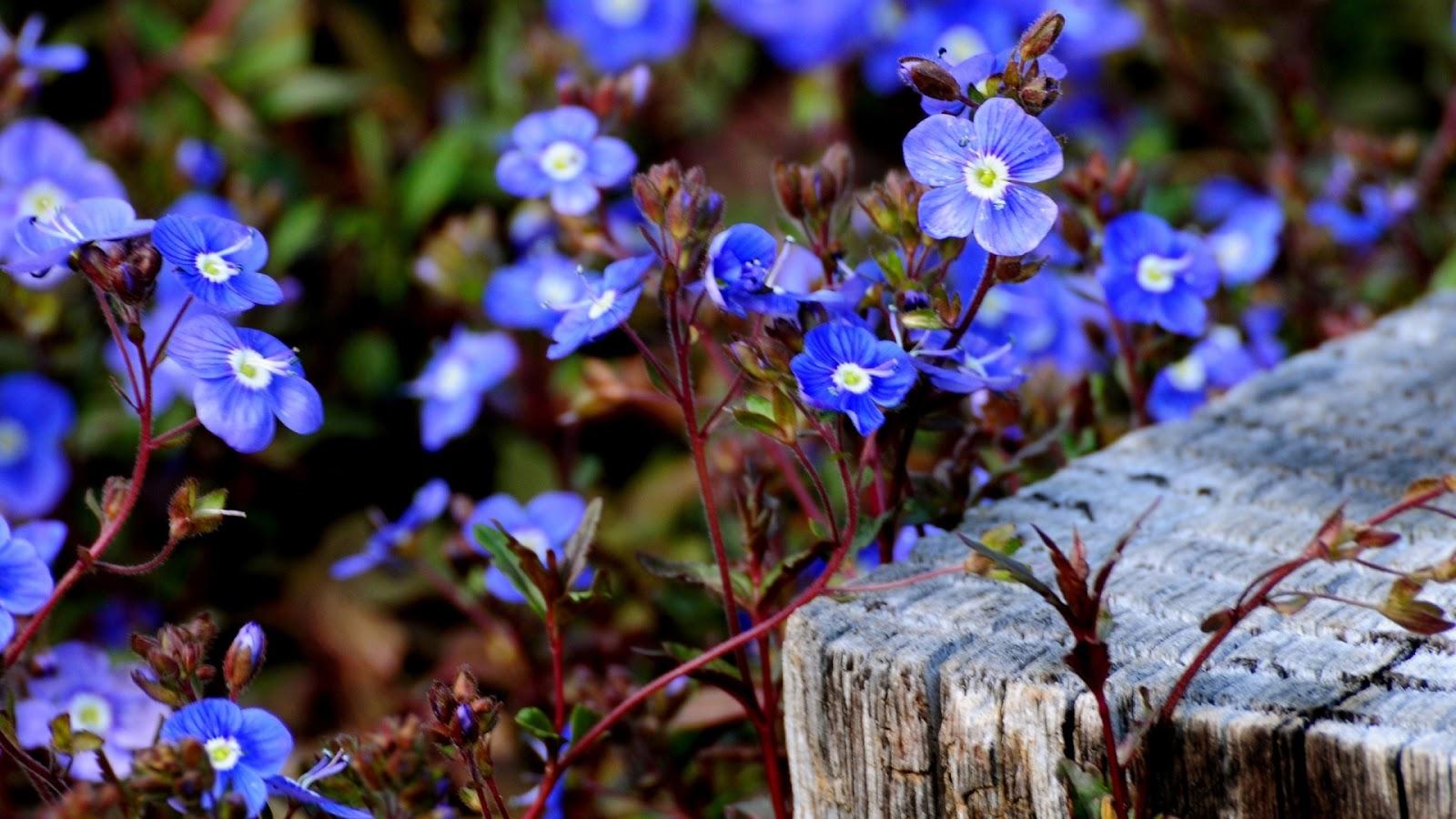 Весна  фото обои на рабочий стол весенние картинки