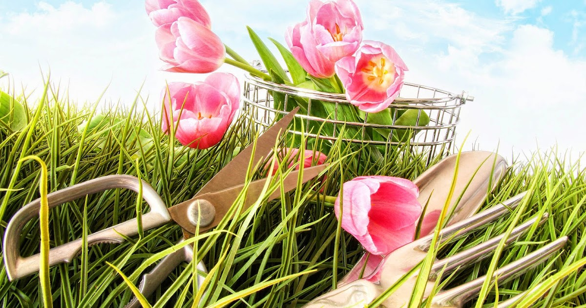 fr hling bilder mit rosa tulpen hd hintergrundbilder. Black Bedroom Furniture Sets. Home Design Ideas