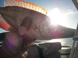 O amarelado do mar