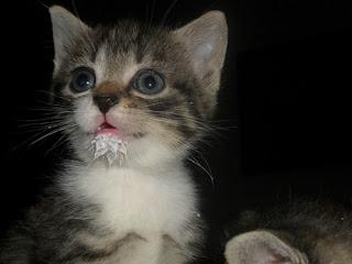 Gato sujo com leite