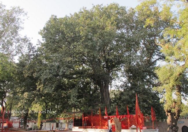 Akshaya Vat in Prayag Allahabad