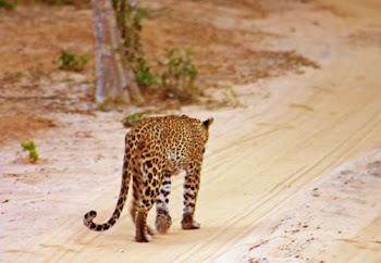 Wilpattuの国立公園 (