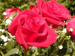 roseflower000