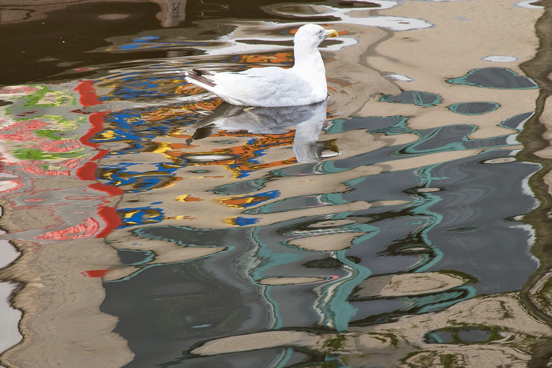 colourful reflection with a seagull