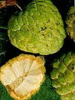 buah srikaya, buah, srikaya, gambar srikaya