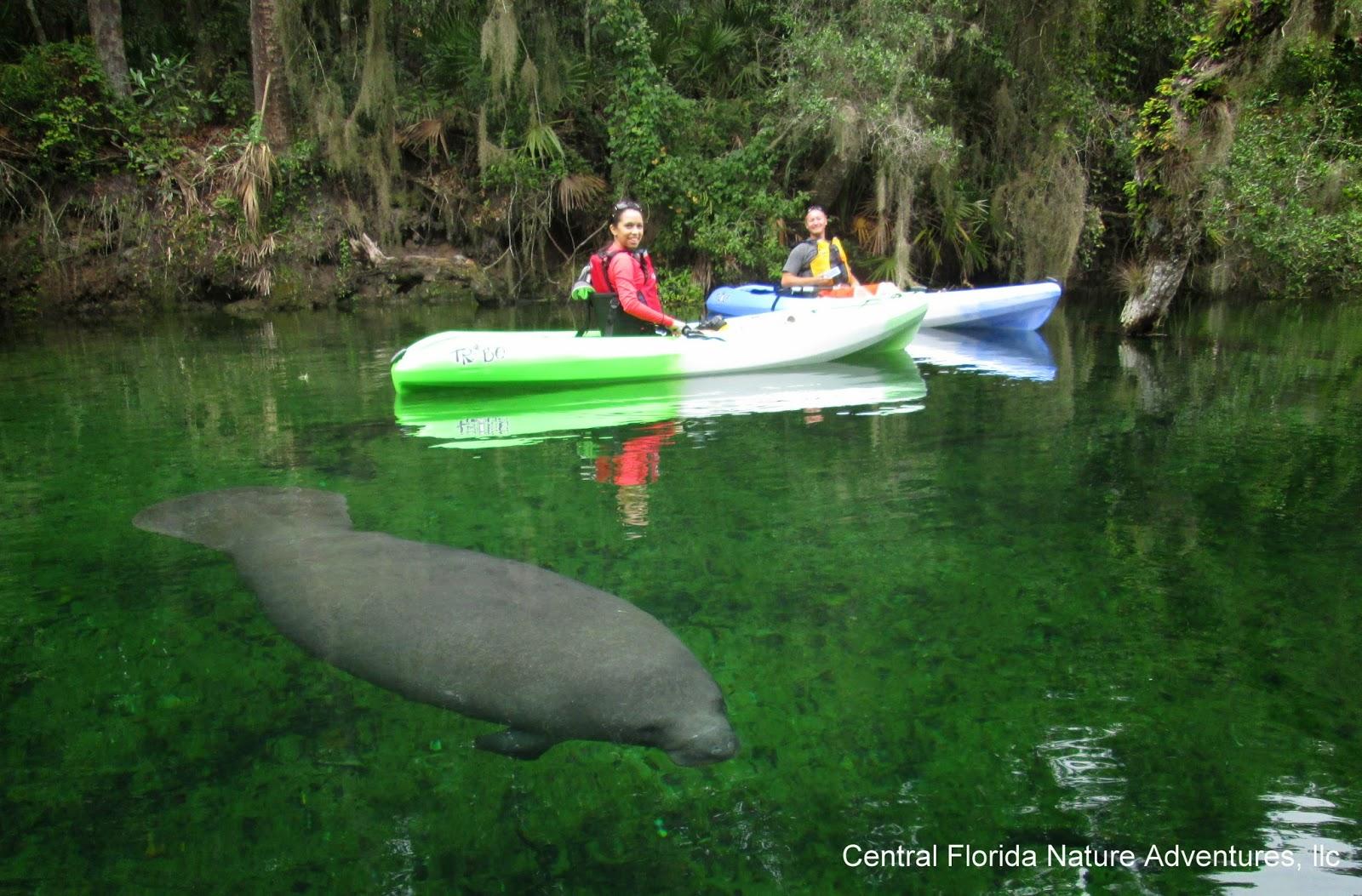 Kayaking near orlando florida for Fishing near orlando fl