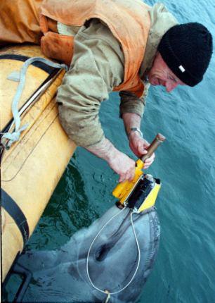 Дельфин Диана в боевом снаряжении