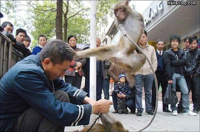 Monkey OWNs everbody