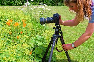 Pengaturan Kamera Terbaik Untuk Fotografi Makro