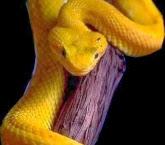 Significado dos Sonhos com Cobra