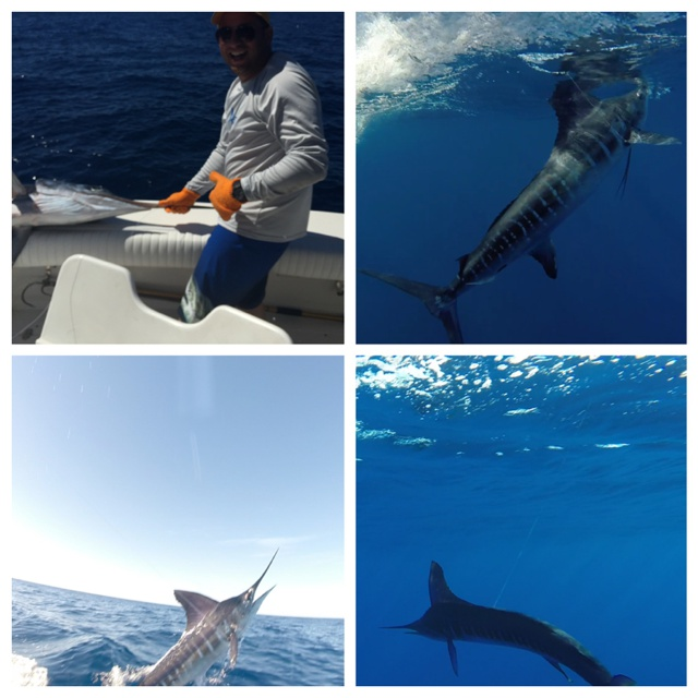 Pisces fleet sportfishing blog a touching story about for Pisces fishing cabo