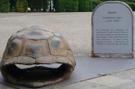 Tartaruga Harriet