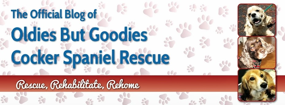 OBG Cocker Connection :: The Official Blog of Oldies But Goodies Cocker Rescue