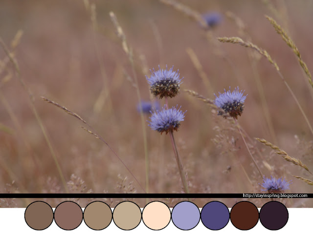 Colour palette knapweed