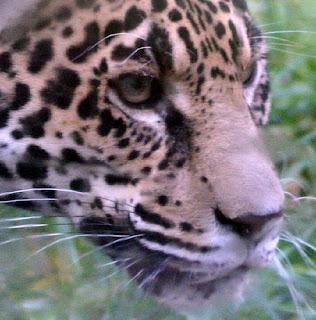 ملف كامل عن اجمل واروع الصور للحيوانات  المفترسة   حيوانات الغابة  2126323998_af907ea196