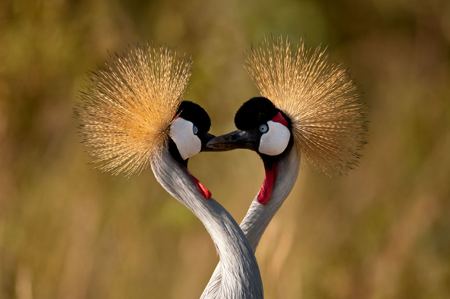 Beautiful love birds images - photo#1
