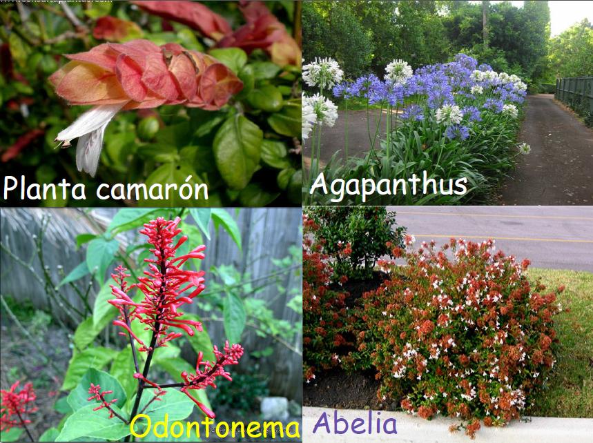 P e u h e c abril 2012 for Plantas de invierno para interior