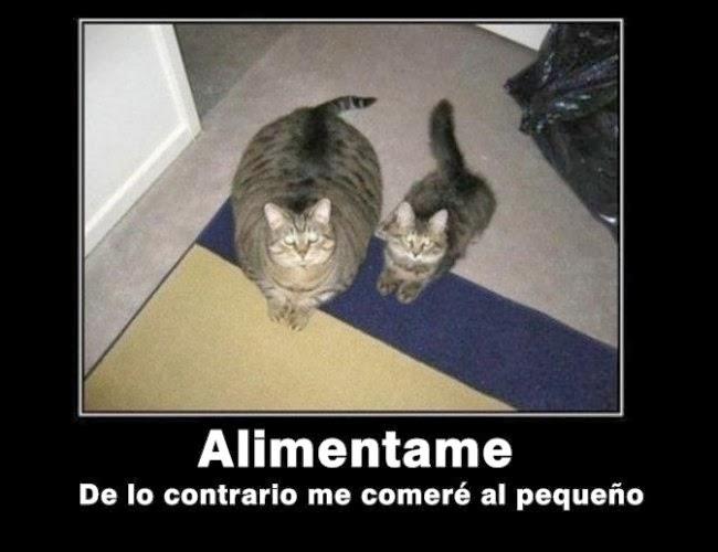 Imagenes Graciosas De Gatos Con Frases - IMAGENES