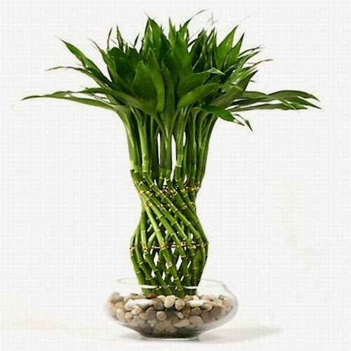 lucky bamboo pineapple braided pillar