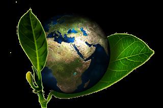 comment faire pousser des légumes écologiques